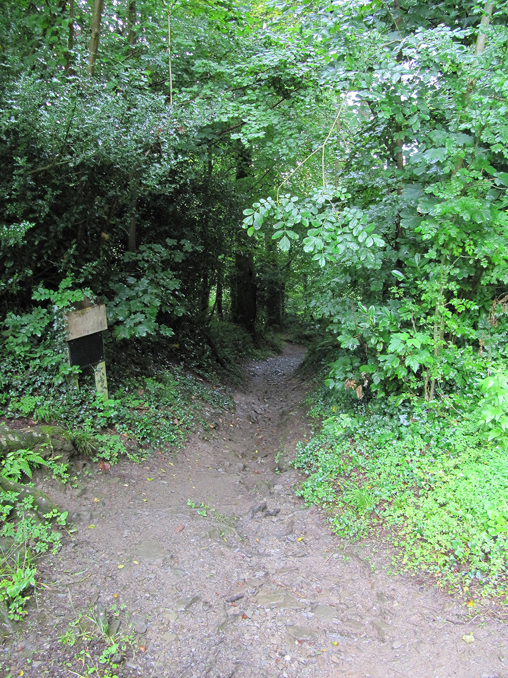 Footpath leading down into the valley. (looking down)